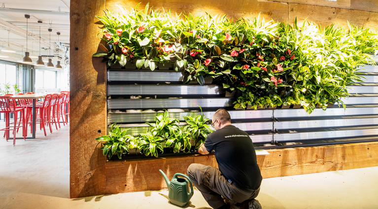 Maintenance service for living wall