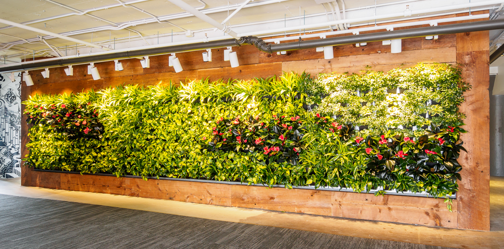 Green wall design and service