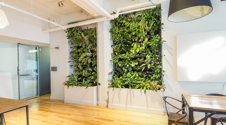 Benefits of a living wall for a work place