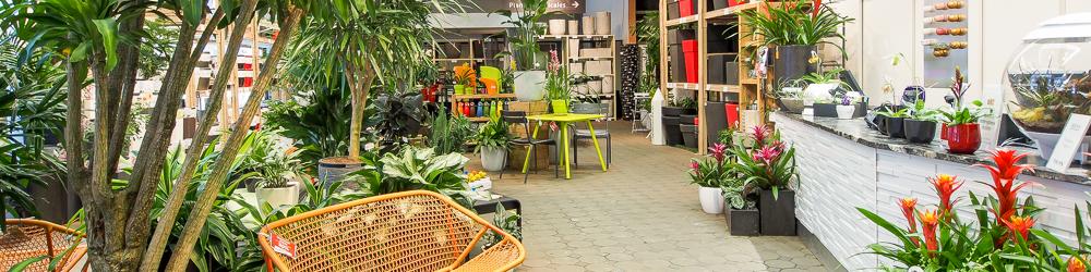 Plantes naturelles artificielles pots mobilier de jardin for Grande plante d interieur facile d entretien