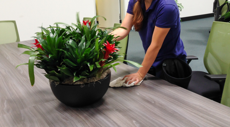 Punctual plant care visits